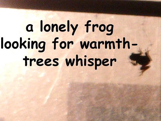 alonelyfrog_00