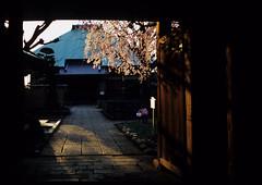 Chohonji 長遠寺