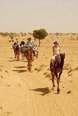 Camel Safari, Jaisalmer, Rajasthan, India Captured April 12, 2006.