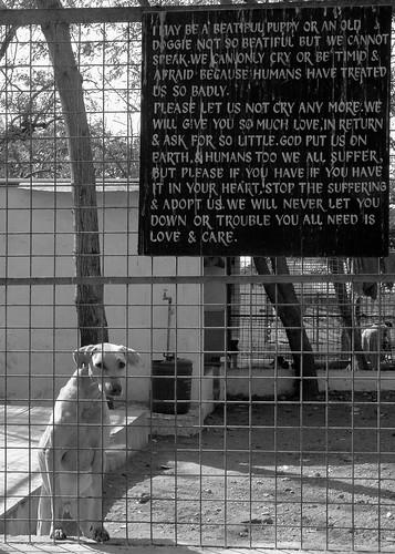 A Doggie's Plea.
