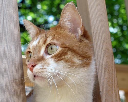 Is jouw kat of hond goed verwend op dierendag?