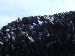 Bird Rock - Mussels