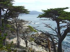 Lone Cypress - Coast I