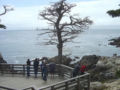 Lone Cypress - Viewing Platform