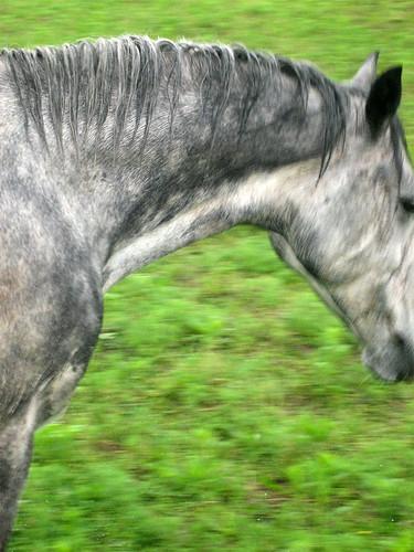 lago-horse