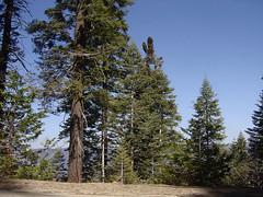Yosemite - Forest