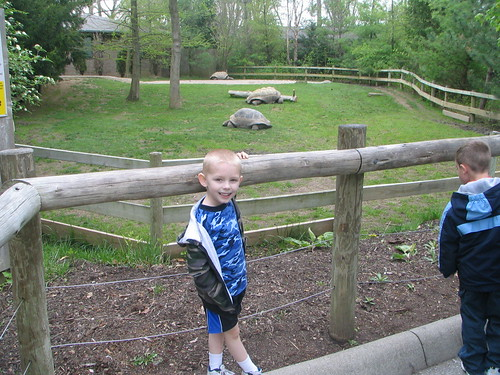 colton and some old tortoises