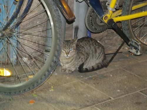 cat 248/248