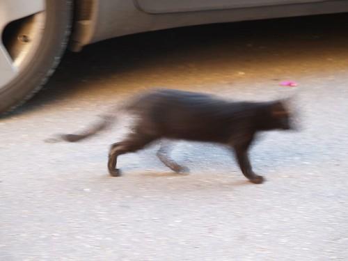 cat 48/248