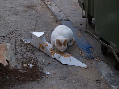 cat 56/248