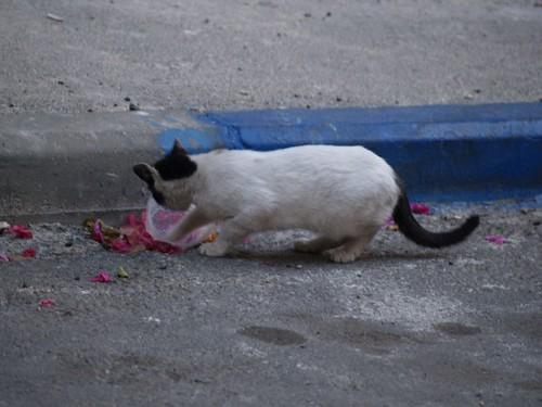 cat 54/248