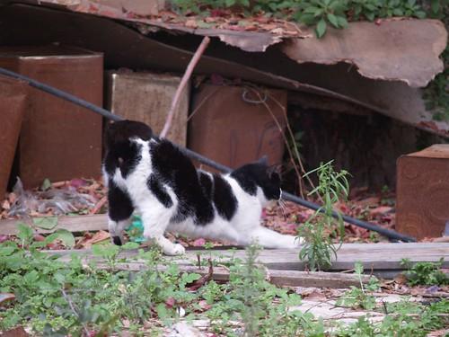 cat 180/248