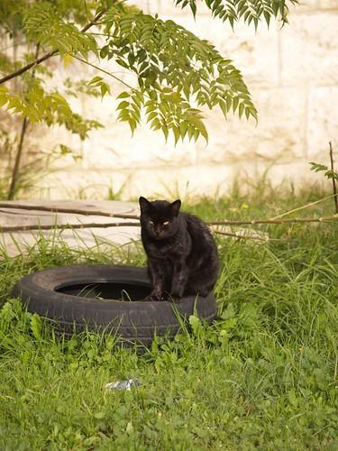 cat 210/248
