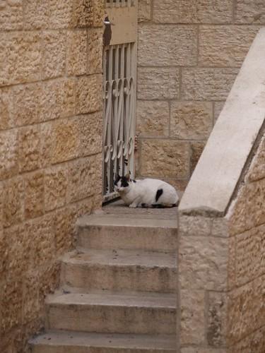 cat 229/248