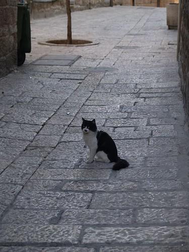 cat 228/248