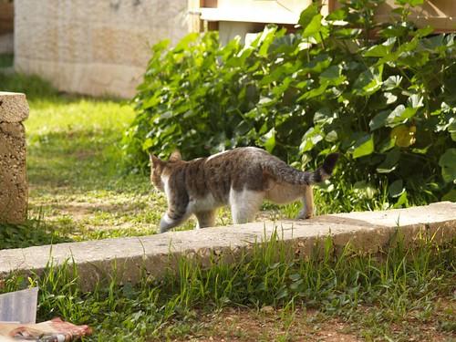 cat 225/248