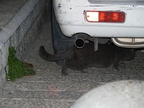 cat 239/248