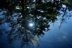 明神池に映る林