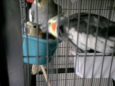 vögeln