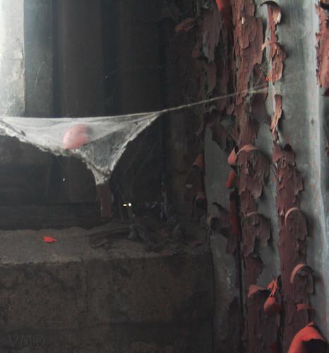 sigplantspiderweb