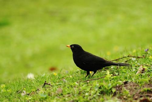 A bird !