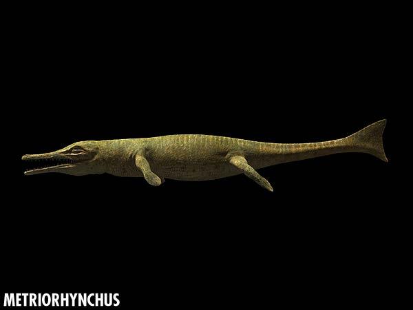 metriorhynchus