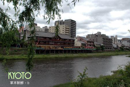 今年初夏的京都鴨川川畔