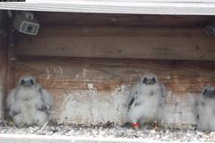 See the Grumpy Babies up Close!