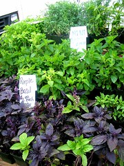 la cienega farmers' market herbs 2