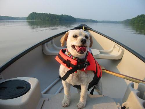 Muffin in Canoe 1