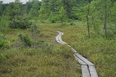 Planks into Ponemah Bog