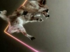 omg you suck because you can't see this awesome picture of this dog flying through the air with lasers in slow motion but it's not really in slow motion because it's a still picture