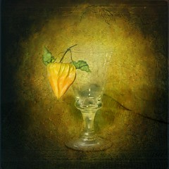 Still-Life,Physalis photo by Arunas S