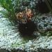 Black Spiky Thing