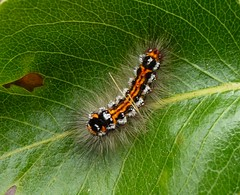 Caterpillar photo by @Jenny@
