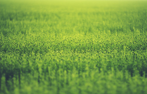 Infinite green photo by Mathijs Delva