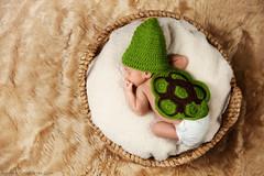 Little Turtle photo by Blake Herman