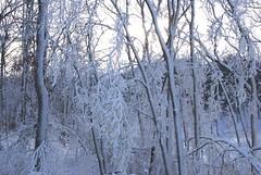 December 13, 2010 Holy SNOW!!! 073