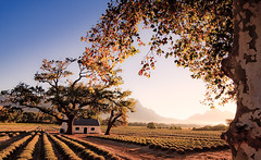 South Africa - Franschhoek: Bliss photo by Nomadic Vision Photography