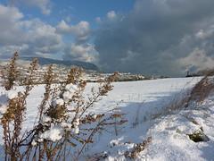 Nevicata del 16-12-2010