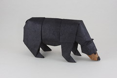 Black Bear photo by Quentin Origami