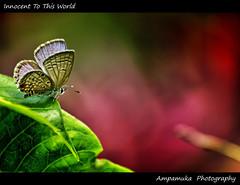Innocent To This World / น้องใหม่ photo by AmpamukA