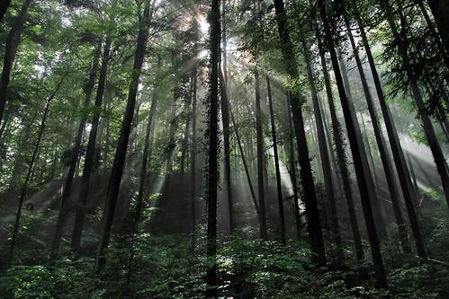 Forêt du Mont Pellerin, Suissse