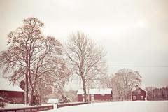 Red Winter photo by JoyHey