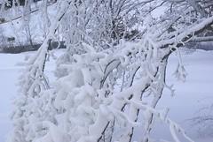 December 13, 2010 Holy SNOW!!! 129