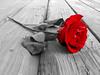 5437423964_7e5ddf4a69_t
