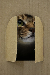 Window_cat_6950 photo by y_and_r_d