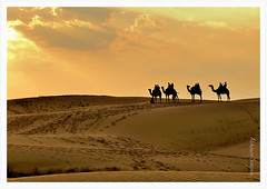 Magical Thar photo by Abhinav Singhai
