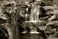 Waterfall in black and white photo by MikeDalePhotos..... 300,000 + views ==> Thank you