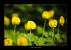 Blooming yellow flowers [explored] photo by e.nhan
